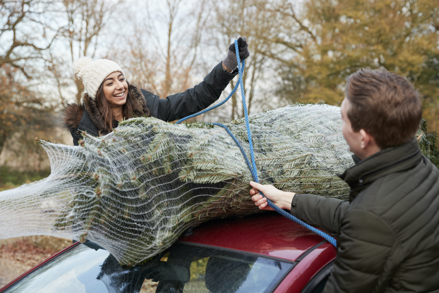 Best ways to transport a christmas tree